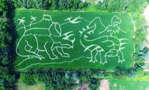 dinosaur corn maze