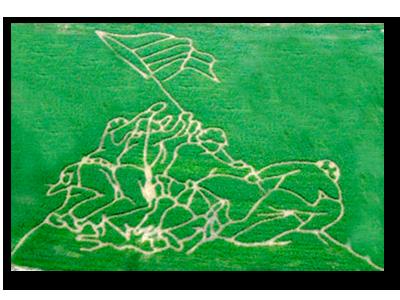 Iwo Jima Corn Maze
